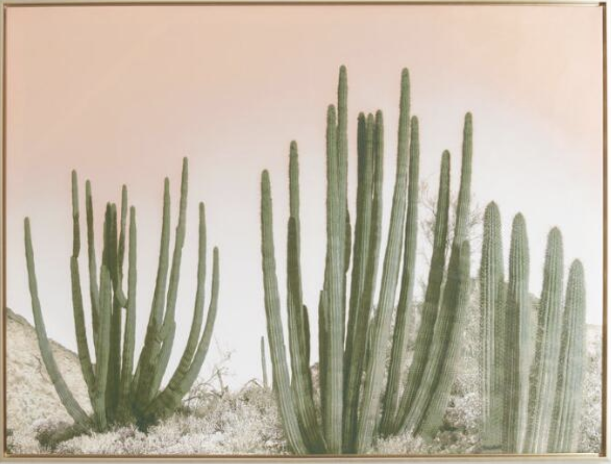 Cactus Art with Gold Frame