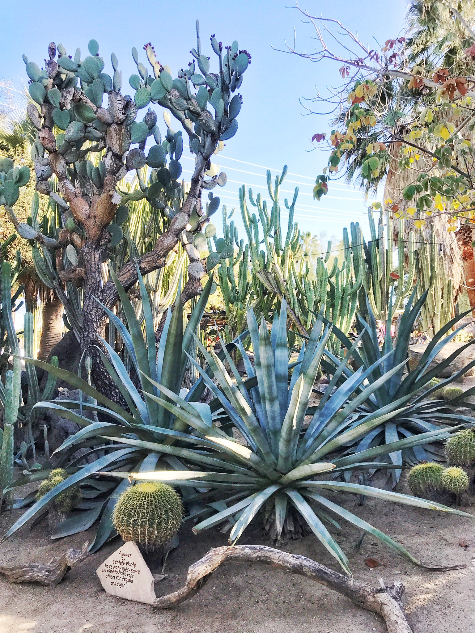 Most Instagram-Worthy Spots in Palm Springs Moorten Botanical Garden