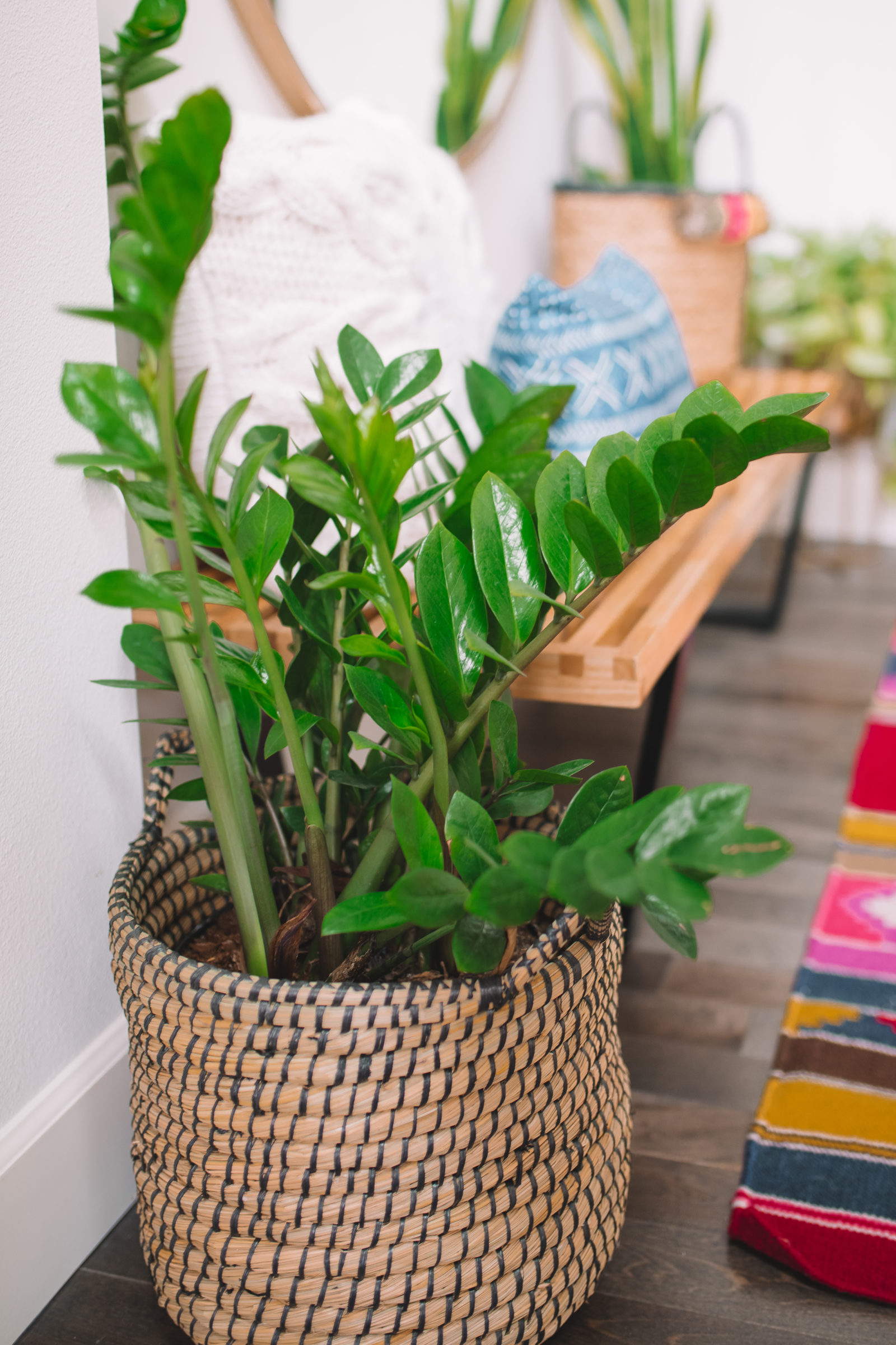 7 Common Houseplants: Air-Purifying Indoor Plants on best floor plants, best plants for shade, best house design, best bulb plants, best house architecture, best aquatic plants, best container plants, best hedgerow plants, best aquarium plants, best house materials, best succulent plants, best fake plants, best sidewalk plants, best cemetery plants, best house accessories, best patio plants, best office plants, best tree houses, indoor plants, best curb appeal plants,