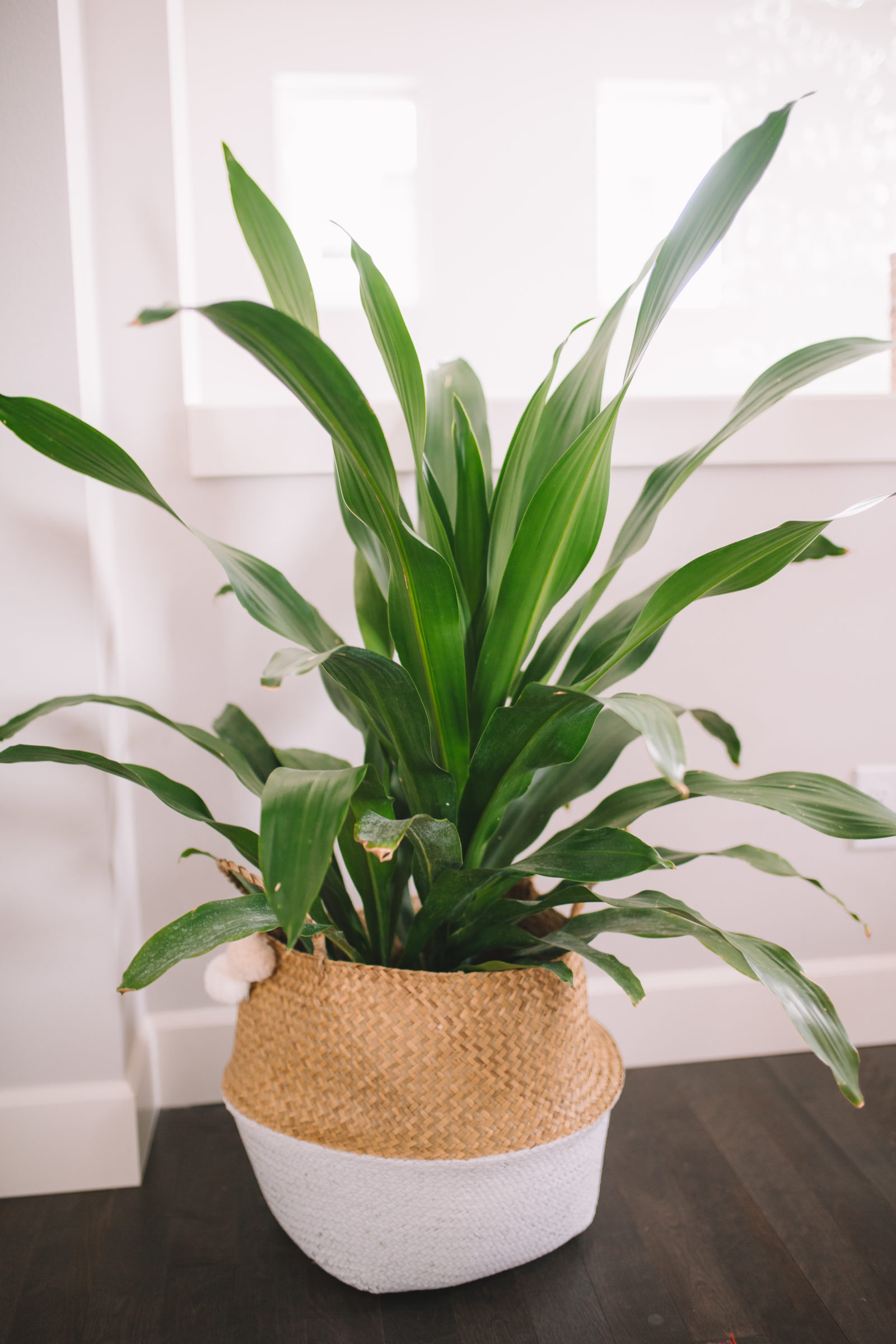 If You Can Only Choose One Of These Common Houseplants And Are Looking To The Best Indoor Plant Which Simultaneously Cleans Air Removes Toxins
