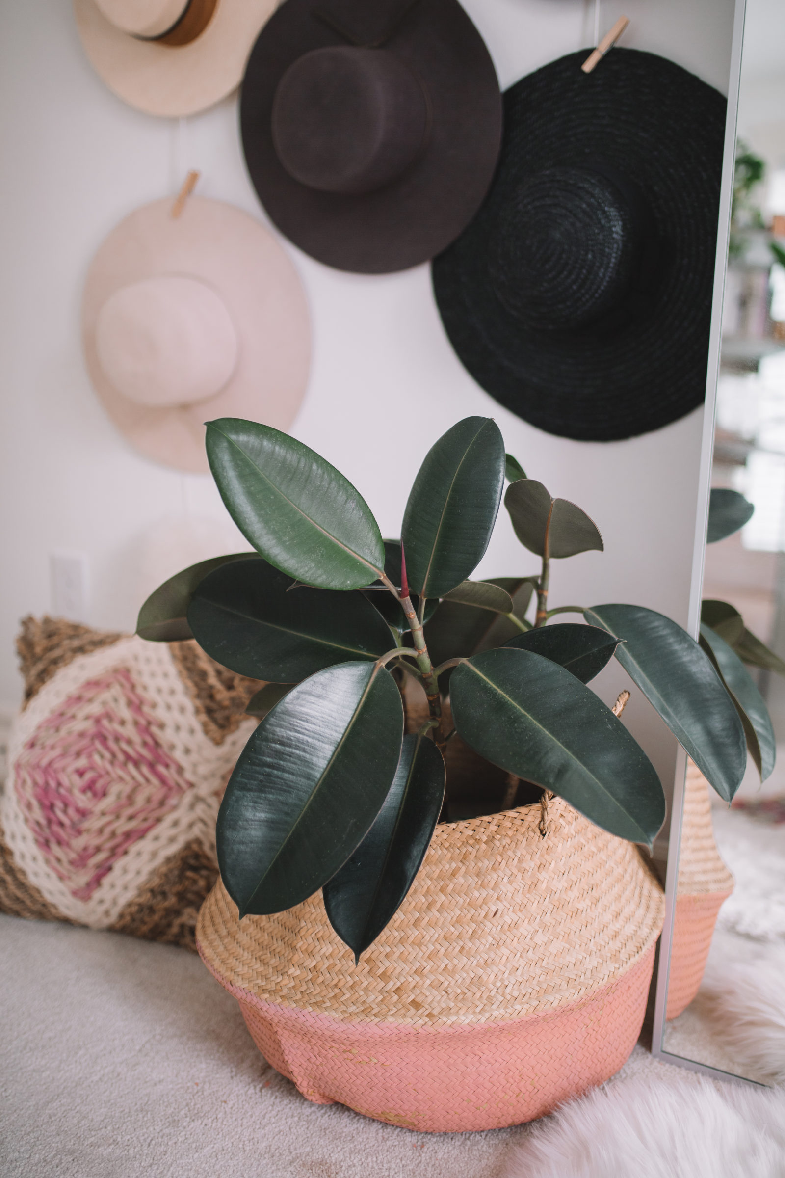 7 Common Houseplants: Air-Purifying Indoor Plants on names of large trees, names of large flowers, tropical houseplants,